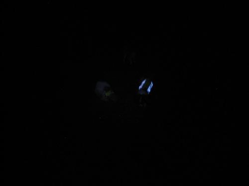 Koirat säkkipimeässä metsässä