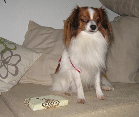 Dingo odottaa lahjansa kanssa