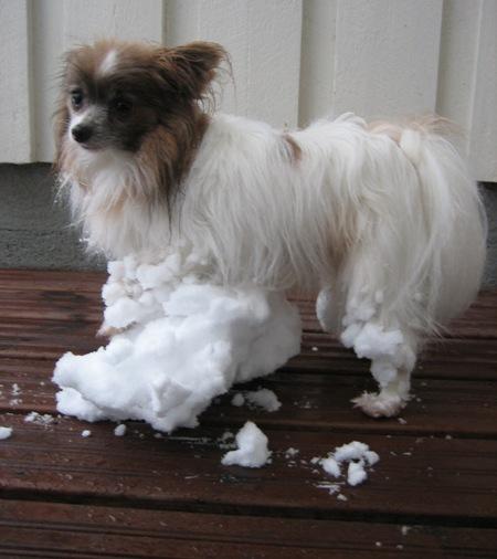 Suuret lumipaakut Tinon jaloissa