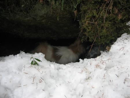 Tino meni heti tutkimaan luolaa
