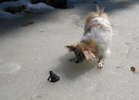 Tino ja sammakko