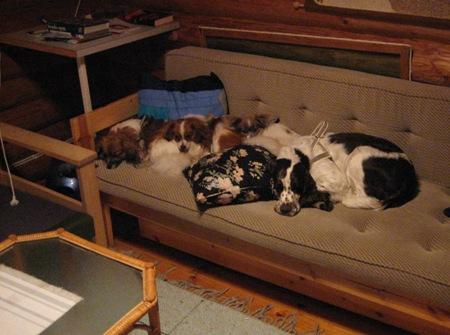 Koirat mökkisohvalla