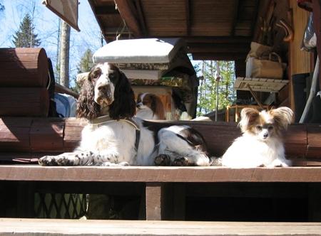 Koirat mökkiterassilla